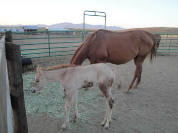 Chiquita's Filly